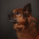 Ritratto del cane metticio - Borgo Leoni Fotografia di animali a Ferrara e Bologna