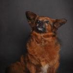 Ritratto di un cane meticcio presso Bomb Studio - Borgo Leoni Fotografia a Ferrara, Bologna ed Italia