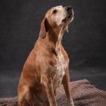 Ritratto del cane meticcio - Borgo Leoni Fotografia di animali a Ferrara e Bologna