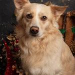 Servizio Natalizio canino - Borgo Leoni Fotografia di animali a Ferrara e Bologna
